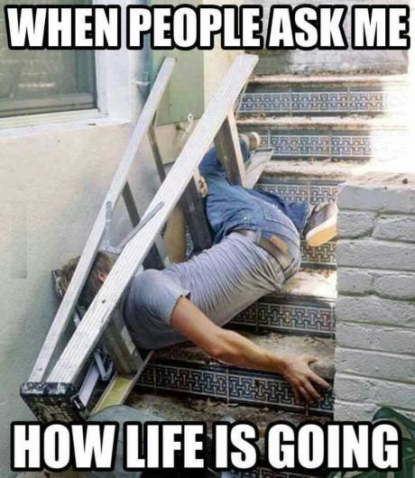 63 Best Funny Life Memes Of All Time