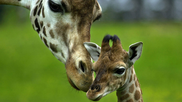 10 Incredibly Sweet Scientific Facts That Will Melt Your Heart