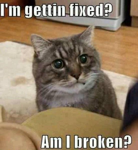 50 Best Funny Cat Memes Of All Time