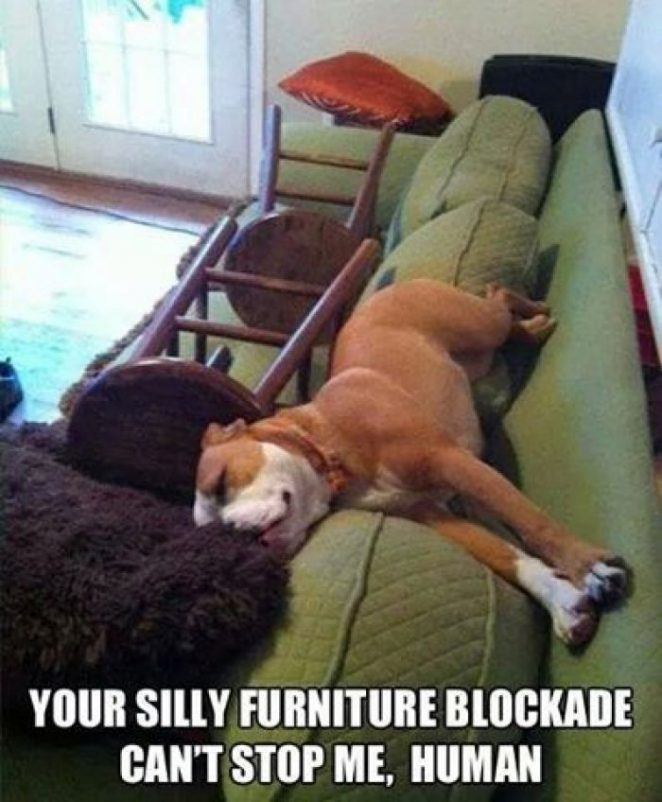 48 Best Funny Dog Memes Of All Time