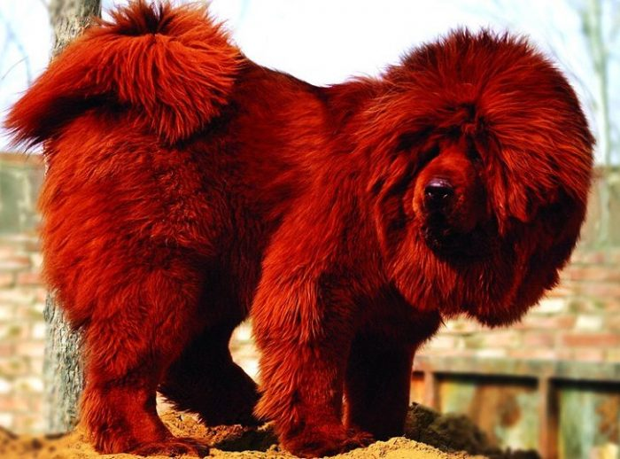 5 Of The Most Expensive Animals In The World