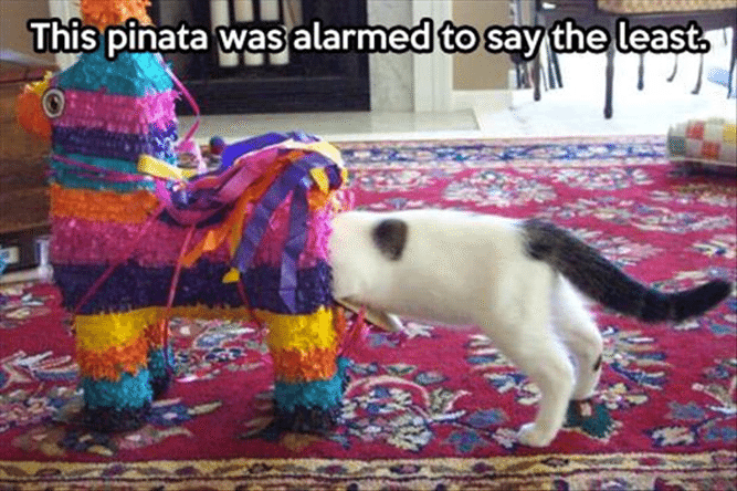 13 Pictures That Will Make You Giggle Like a Baby