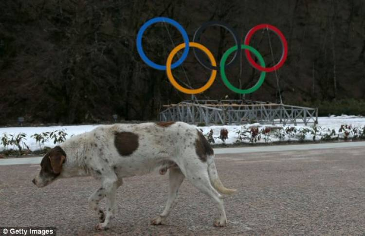 15 Most Disturbing Things That Happened During The Olympics
