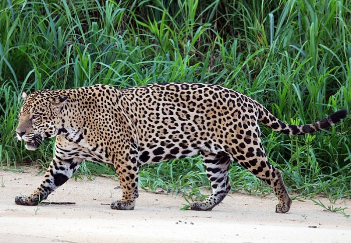 The Most Dangerous Animals Of The Amazon!