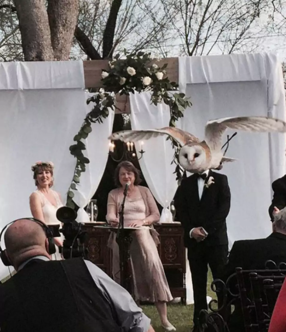 12 Perfectly Timed Photos That Will Make You Look Thrice At Them