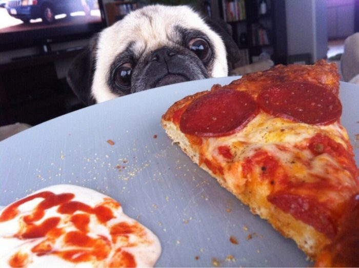 10 Photos Of Animals, Which Perfectly Reflect Your Relationship With Food