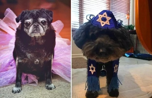 Dogs That Live Better Than Half The People (17 Photos)