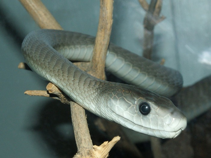 21 Of The World's Most Dangerous Snakes