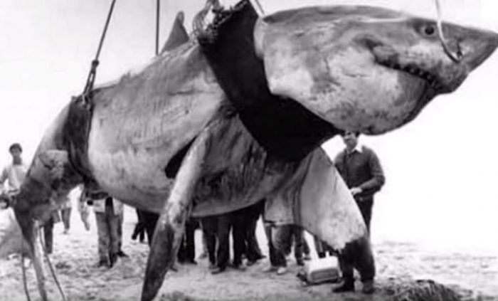 12 Insane Fishing Catches That Almost Broke The Internet