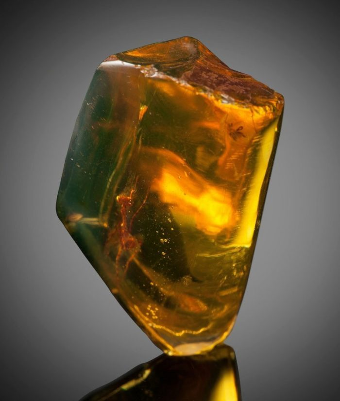 This Mantis Was Frozen In Amber 12 Million Years Ago