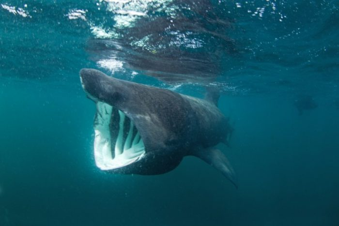 10 Surprising Shark Facts Will Make You See Them In A Different Light