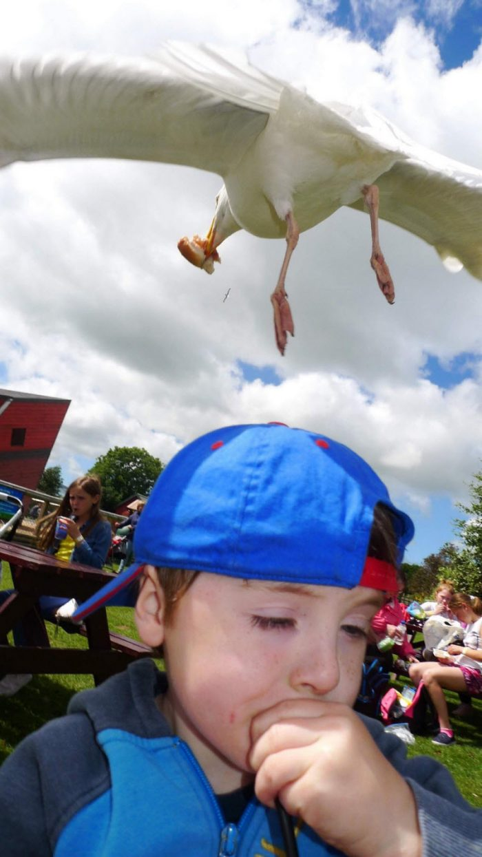40 Photos Taken At The Right Time