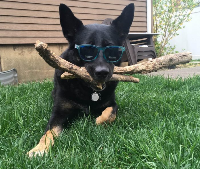 31 So Funny Animals Pictures Of The Day