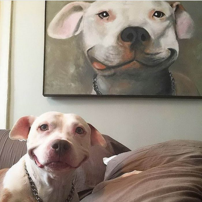 33 Funny Animals Pictures Of The Day