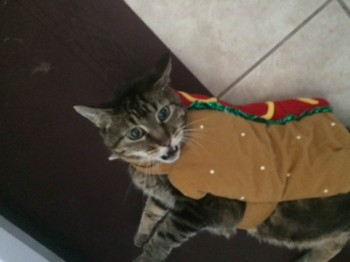 27 Very Funny Animals Pictures Of The Day