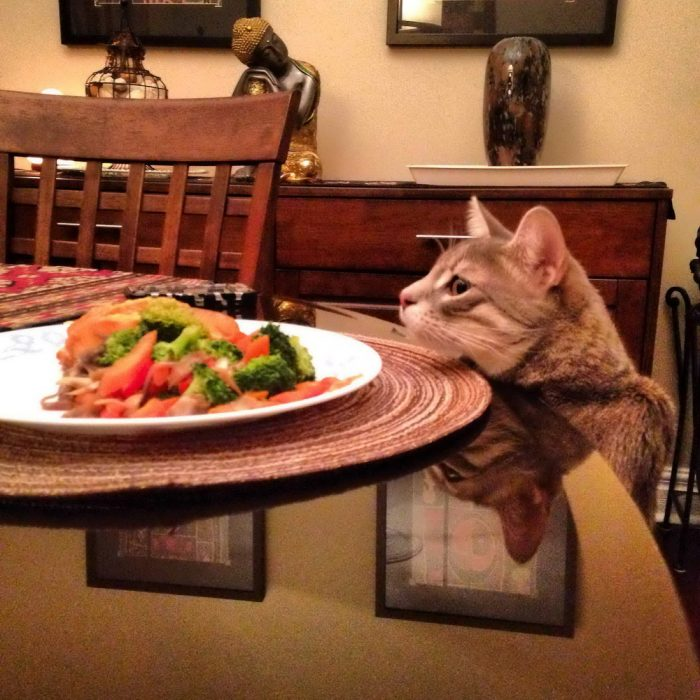 30 Most Funny Animals Pictures To Make Your Day