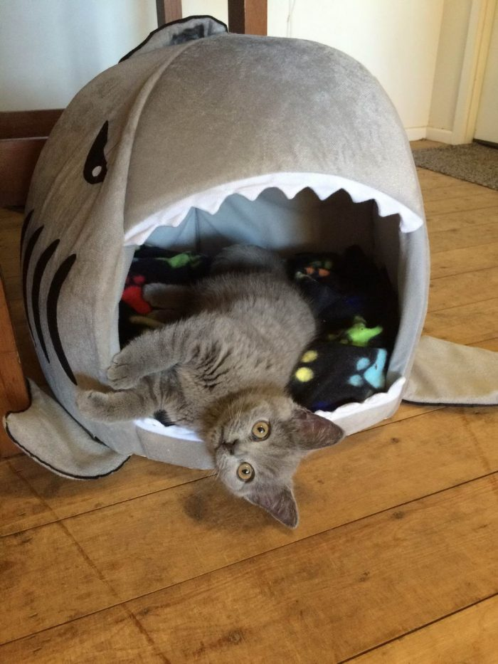 36 Funny Animals Pictures To Make Your Day