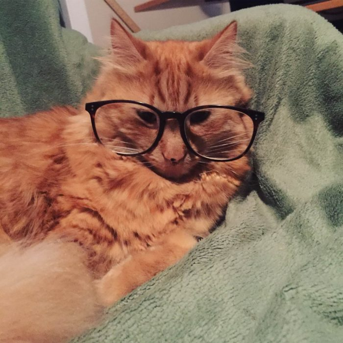 71 Very Funny Animals Pictures To Make Your Day