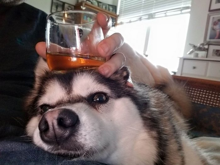 31 Very Funny Animals Pictures To Make Your Day