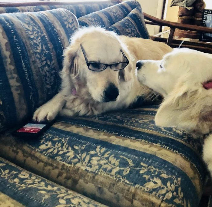 71 Funny Animals Pictures To Make Your Day