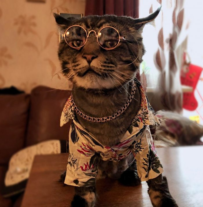 Funny Animals Pictures To Make Your Day (31 Photos)