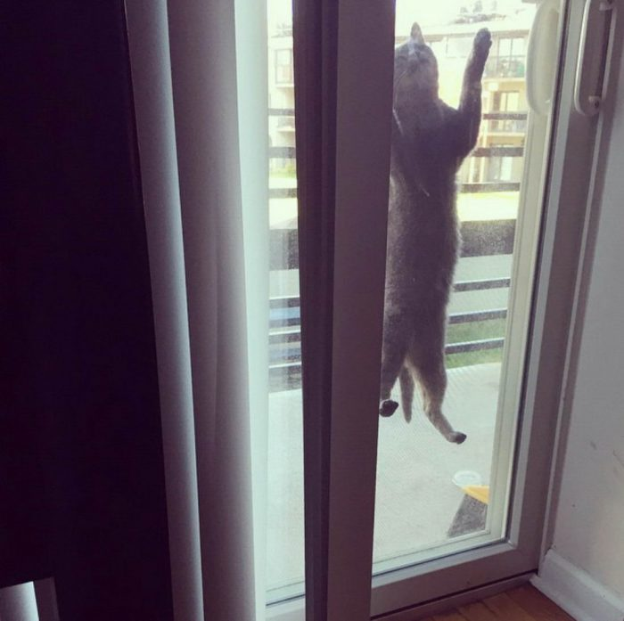 Funny Animals Pictures To Make Your Day (33 Photos)