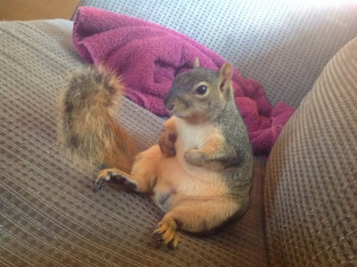 Funny Animals Pictures To Make Your Day (32 Photos)
