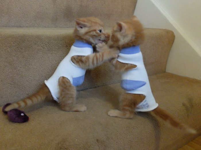 Funny Animals Pictures To Make Your Day (34 Photos)