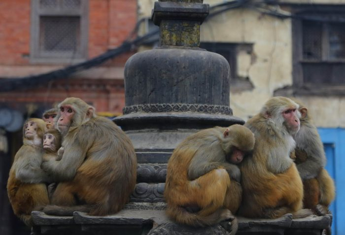 Daily Life In Nepal (25 Photos)