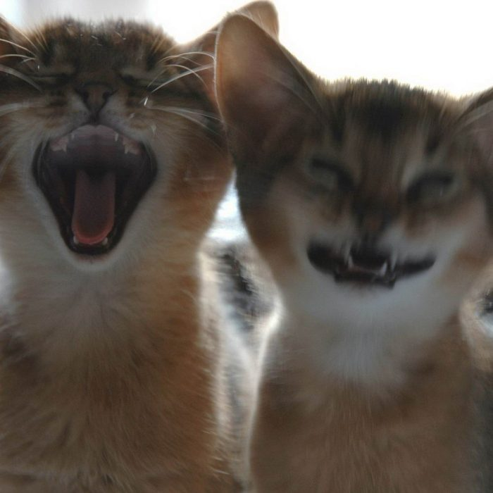 Funny Animals Pictures To Make Your Day (30 Photos)