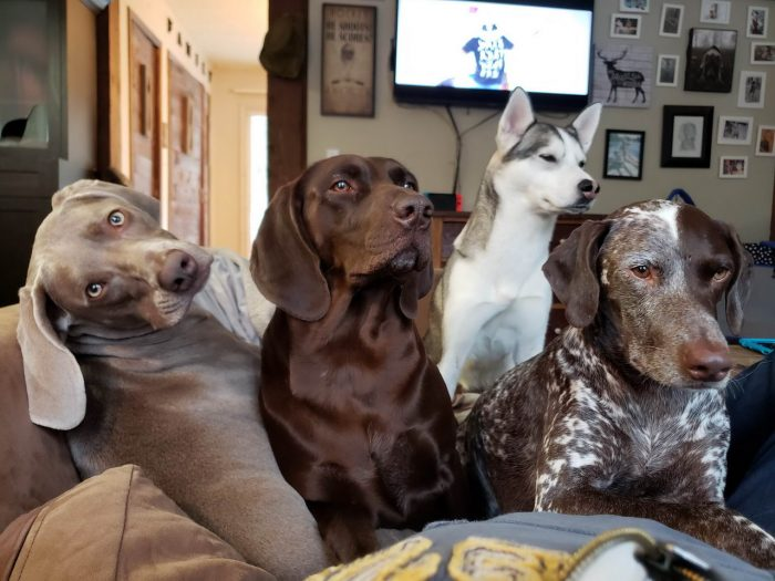 Funny Animals Pictures To Make Your Day (74 Photos)
