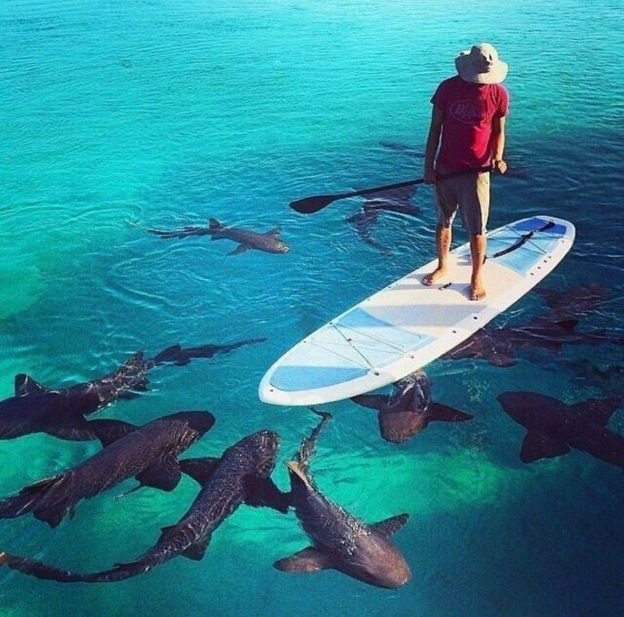 Cool Pictures Say More Than Just Thousand Words (40 Photos)