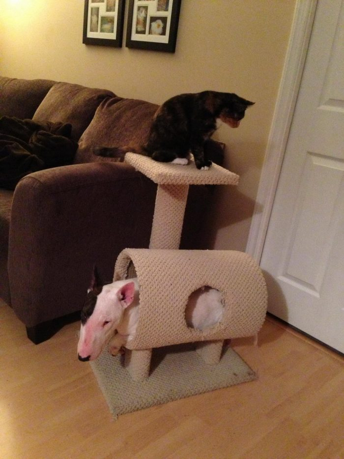 Funny Animals Pictures To Make Your Day (35 Photos)