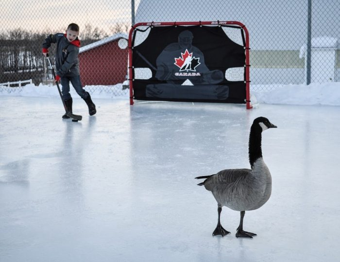 Funny Pictures From Canada (36 Photos)