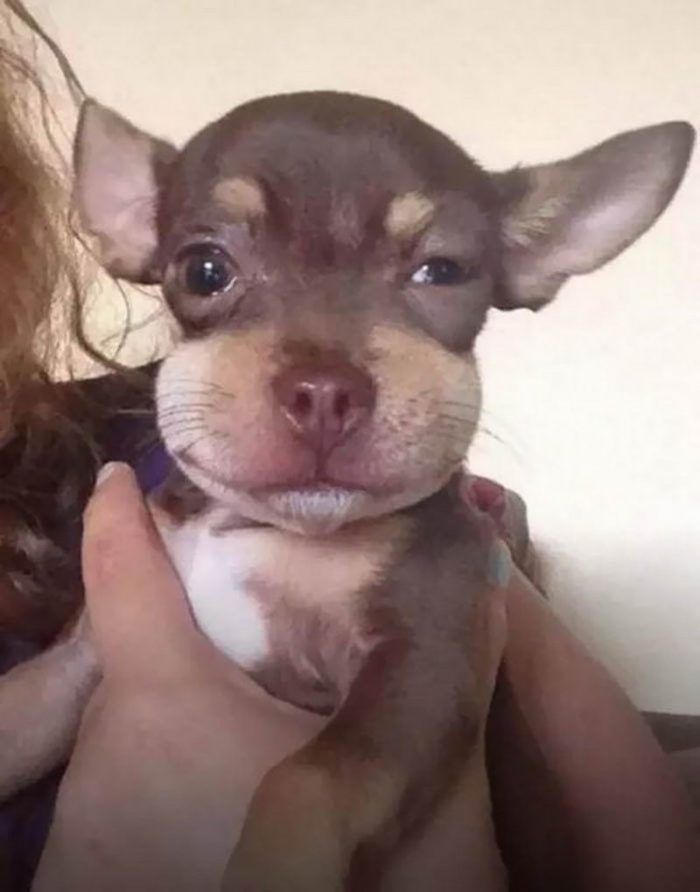 Funny Dogs Pictures To Make Your Laugh (29 Photos)