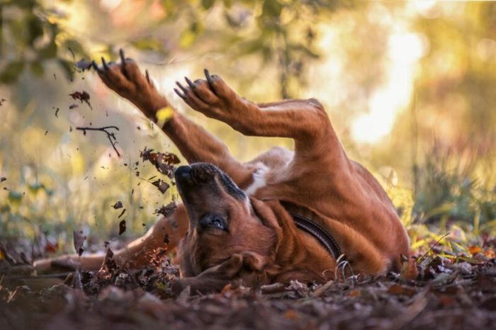 Best Of Dog Photographer Of The Year (29 Photos)