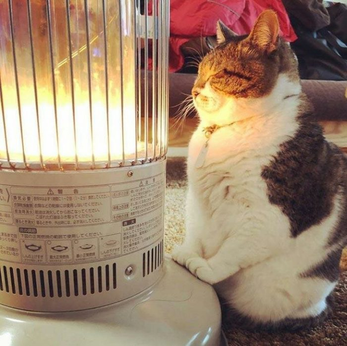 Funny Cats That Are Fat (18 Photos)