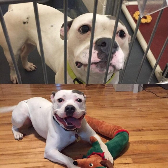 Cats And Dogs Before And After Meeting People (20 Photos)