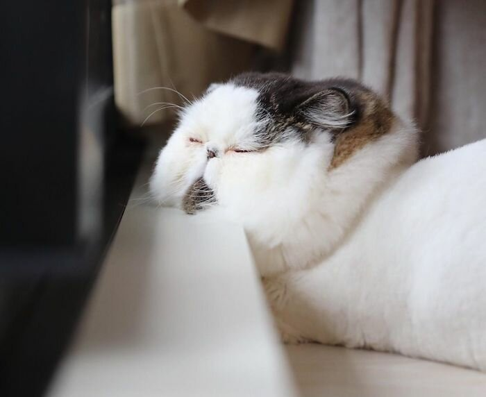 These 20 Cat-Ball Pics Will Not Leave Anyone Indifferent!