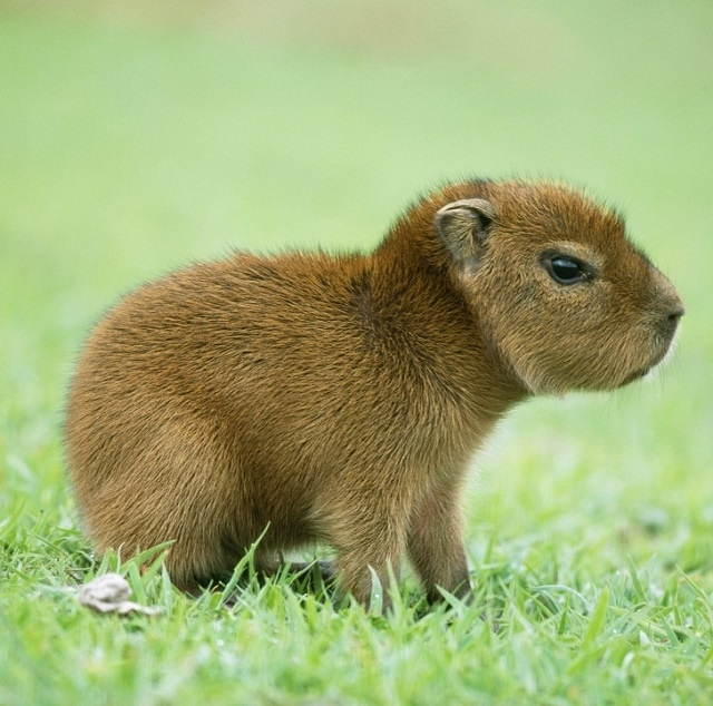 Cute Baby Animals You Have Ever Seen (24 Photos)
