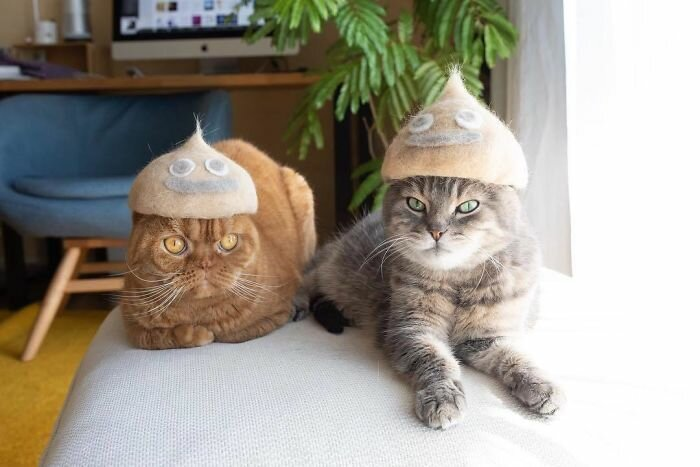 Cute Cats In Funny Hats (30 Photos)