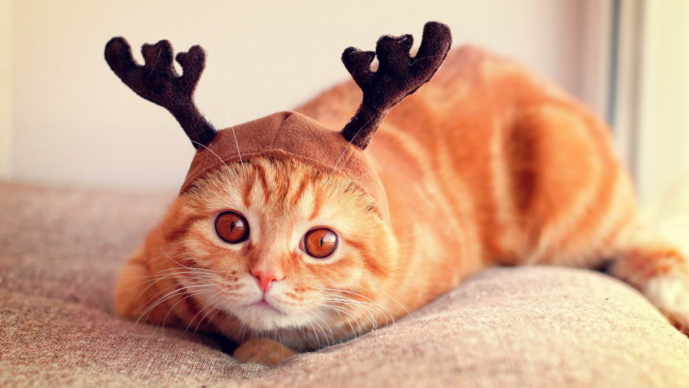 Cute And Funny Animals Pictures To Make Your Day (36 Photos)