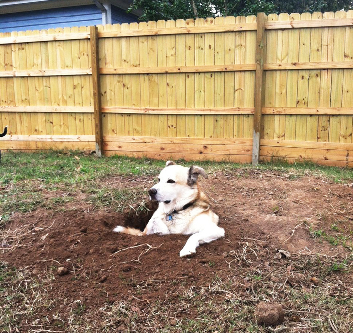 What Do Pets Do While No One Sees Them? (18 Photos)