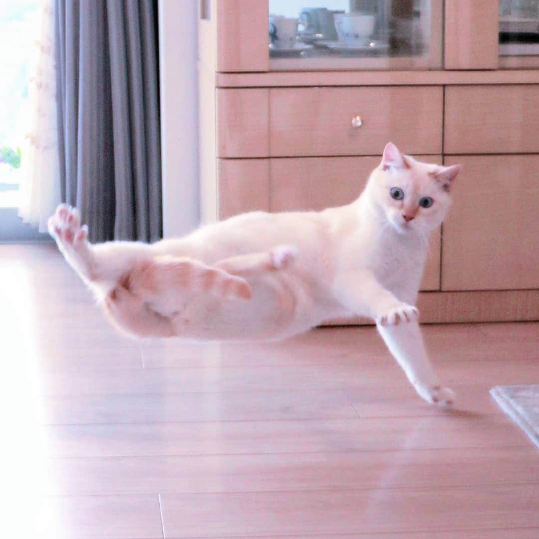 Chaco And Suzuka: Funny Cats Who Conquered The Network With Their Grace (18 Photos)