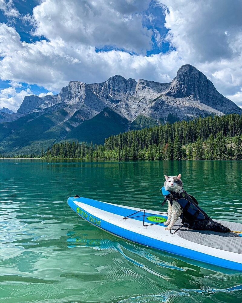 Fluffy Cat Gary From Canada Like To Travel (20 Photos)