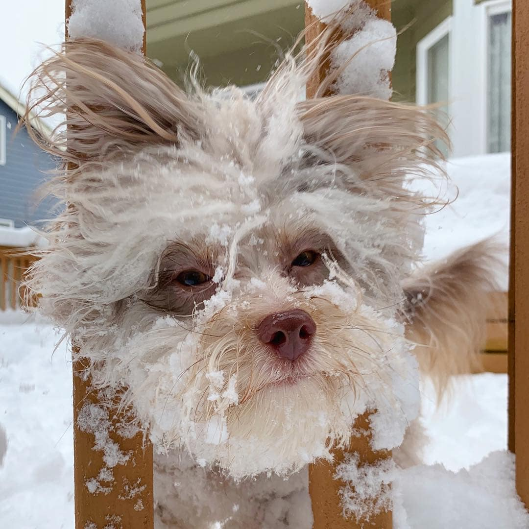 Funny Dog Nori With An Absolutely Human Face (25 Photos)