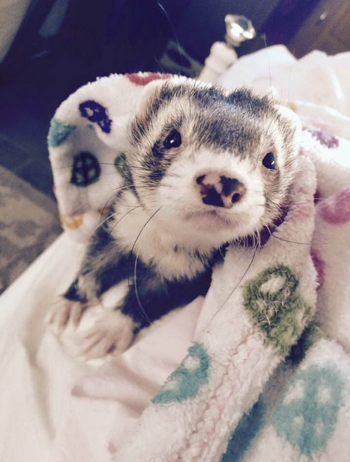 Cute And Funny Animals Pictures To Make Your Day (39 Photos)