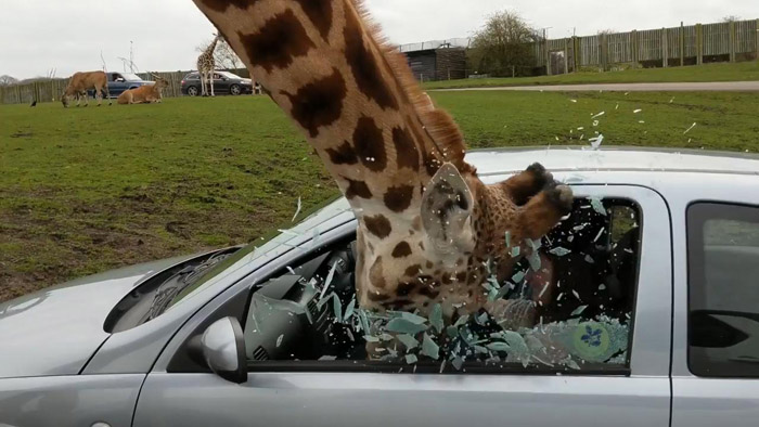 Funny Pictures That Were Taken At Just The Right Time (36 Photos)