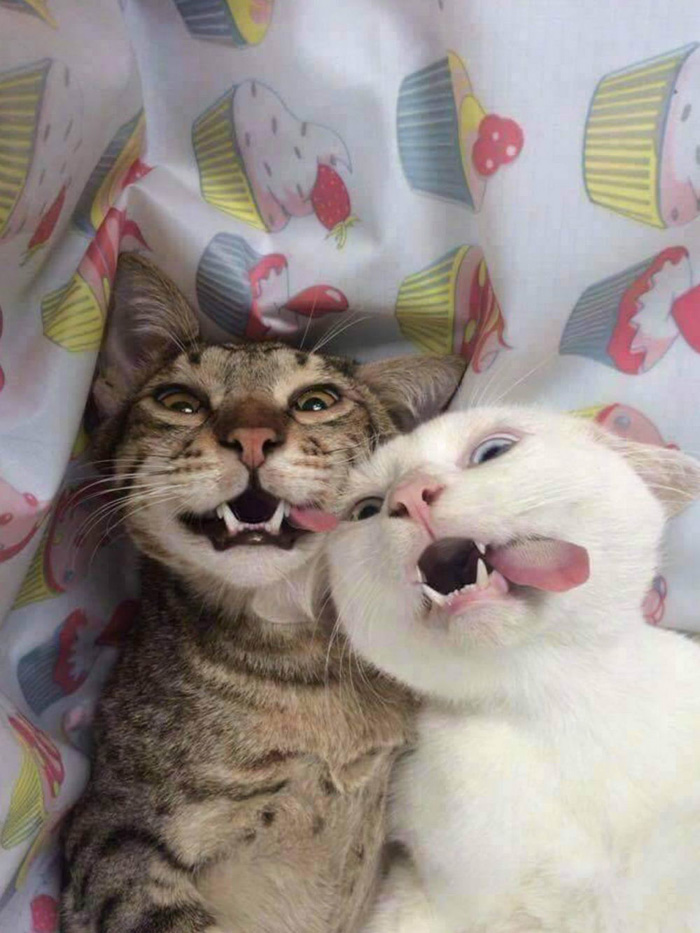 Cute And Funny Animals Pictures To Make Your Day (38 Photos)