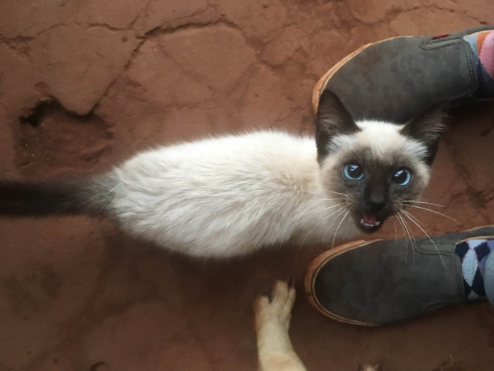 Cute And Funny Animals Pictures To Make Your Day (37 Photos)